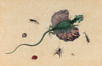 A Flying Dragon and Various Insects | Johannes van Bronckhorst | oil painting