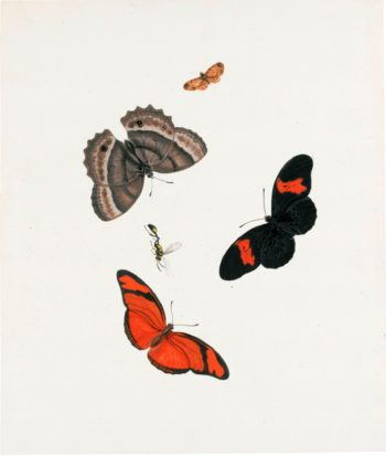 Three Butterflies a Moth and a Wasp | Johannes van Bronckhorst | oil painting