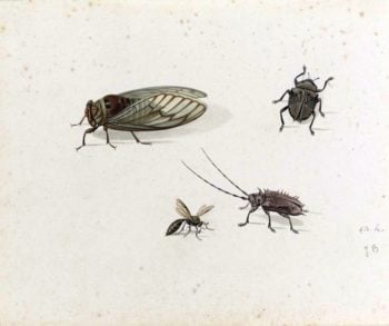 Two Beetles a Wasp and a Cicada | Johannes van Bronckhorst | oil painting