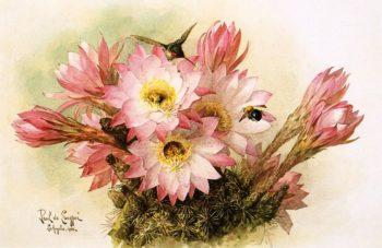 Cactus Blossoms | Raoul de Longpre | oil painting