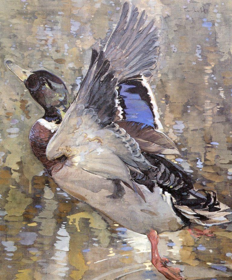 A Mallard Rising | Joseph Crawhall | oil painting