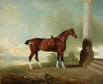 Favorite Chestnut Hunter of Lady Frances Stephens [nee Lady Frances Pierrepont] | Benjamin Marshall | oil painting
