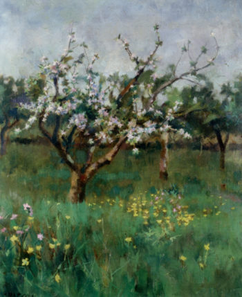 Aplle Blossoms | Harold Harvey | oil painting