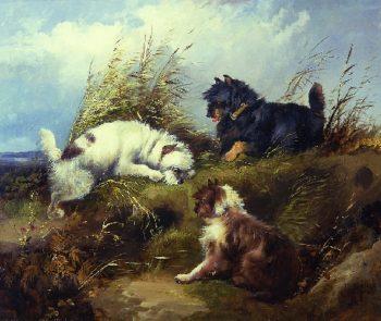 Terriers | George Armfield | oil painting