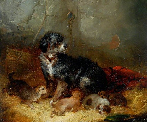 Dog With Puppies Painting George Armfield Oil Paintings