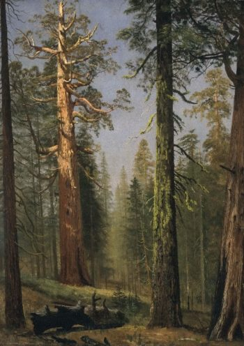 The Grizzly Giant Sequoia | Albert Bierstadt | oil painting