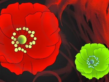 Flower Painting No.16 | Ocean's Bridge Artist | oil painting