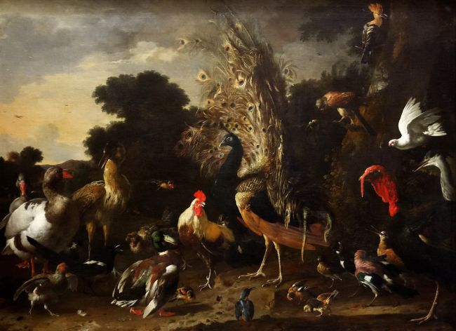 The Poultry Yard with Rooster Peacock and Turkey   Melchior de Hondecoeter   oil painting