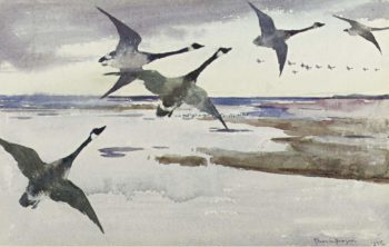 Canadian Geese 1895 | Frank Weston Benson | oil painting