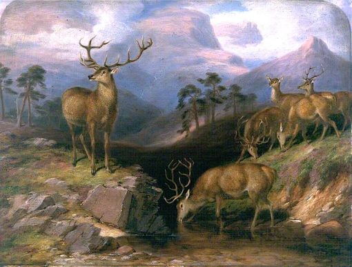 Deer | James Giles | oil painting