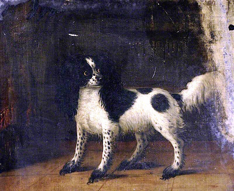A Black and White King Charles Spaniel | Thomas Gooch | oil painting