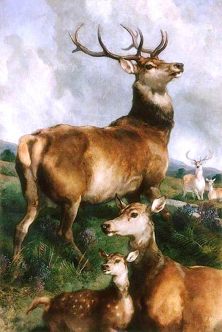 Deer of Chillingham Park