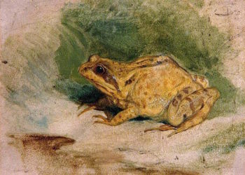 Study of a Frog | Sir Edwin Landseer | oil painting