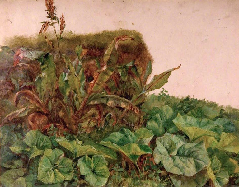 Study of Wayside Plants | Sir Edwin Landseer | oil painting