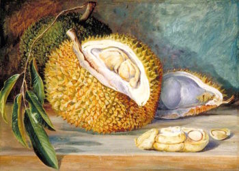 Durian Fruit from a Large Tree