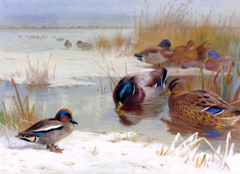 Mallard and a Teal in a Winter Landscape | Archibald Thorburn | oil painting