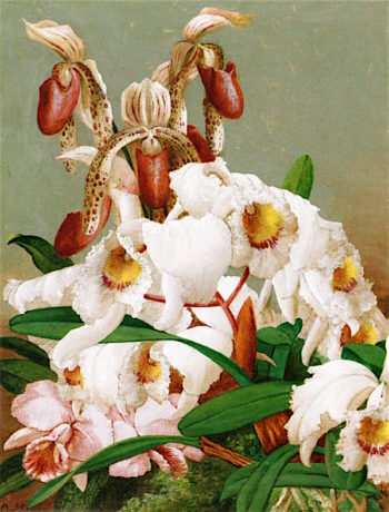 Orchids | Charles Storer | oil painting