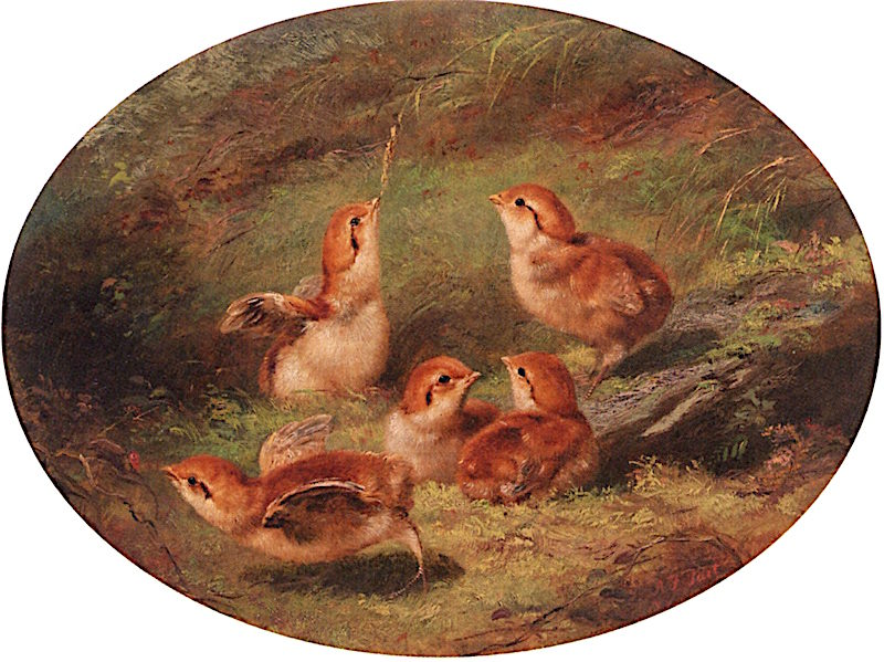 Young Ruffed Grouse | Arthur Fitzwilliam Tait | oil painting