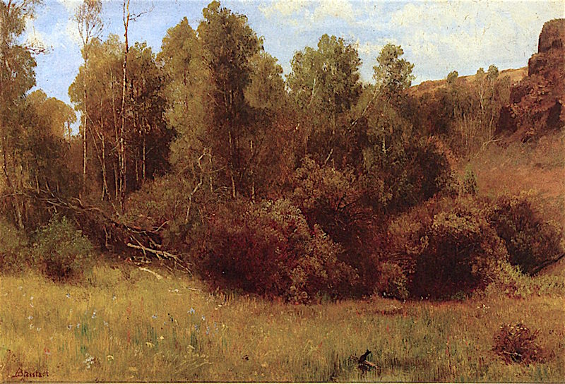 Aspen Grove near Donner Lake | Albert Bierstadt | oil painting