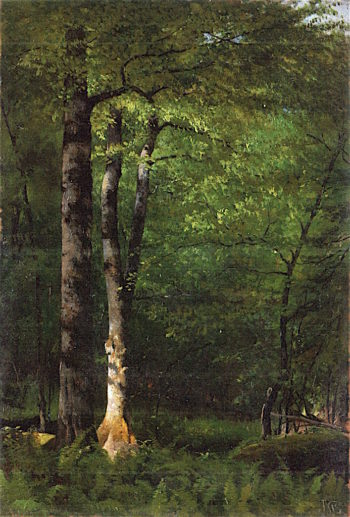 Beeches and Ferns | Jervis McEntee | oil painting