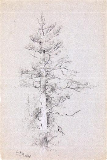 Tree Study | Jervis McEntee | oil painting