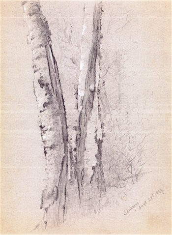 Study of Birch Trunks | Jervis McEntee | oil painting