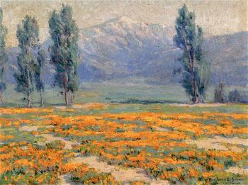 Golden Poppies near Mount San Jacinto