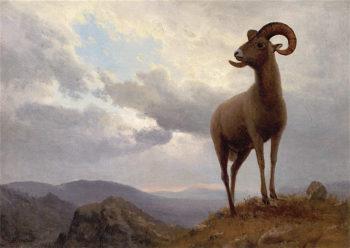 Bighorn Sheep | Albert Bierstadt | oil painting