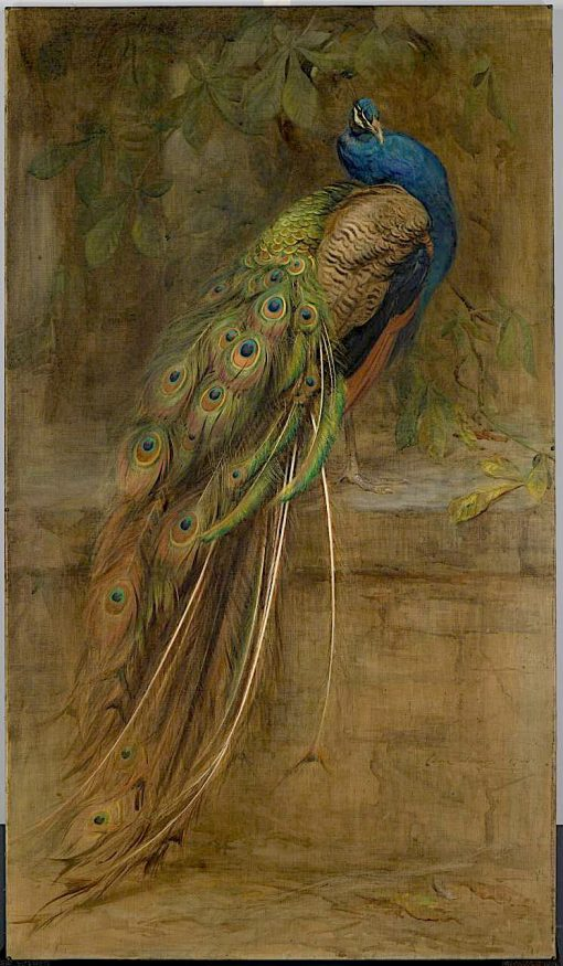The Peacock | Edwin John Alexander | oil painting