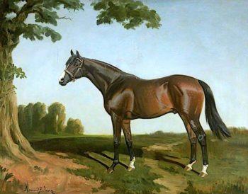Royal Lancer