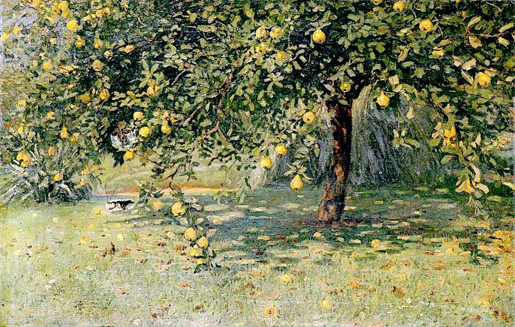quince tree ile ilgili görsel sonucu