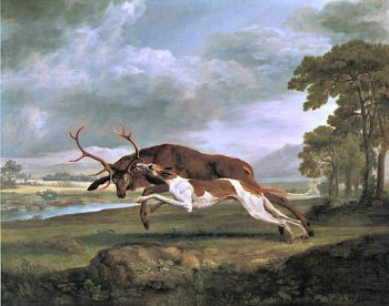 Greyhound Attacking a Stag | George Stubbs | oil painting