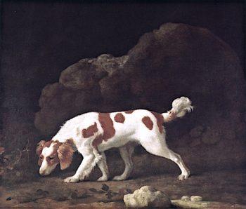 Spaniel | George Stubbs | oil painting
