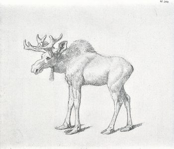 The Duke of Richmonds Second Bull Moose | George Stubbs | oil painting