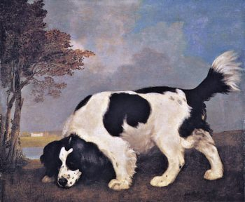 Black and White Spaniel Following a Scent | George Stubbs | oil painting