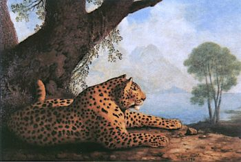 Recumbent Panther | George Stubbs | oil painting