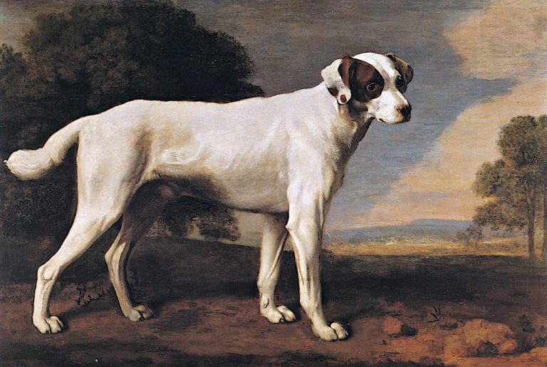 Viscount Gormanstons White Dog | George Stubbs | oil painting