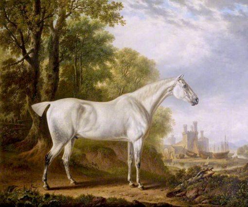 Billy a Favourite Horse of James Dearden