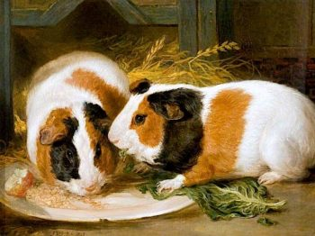 Double Portrait of Henrietta Wards Pet Guinea Pig | James Ward | oil painting