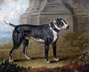 Bull Terrier | Charles Towne | oil painting