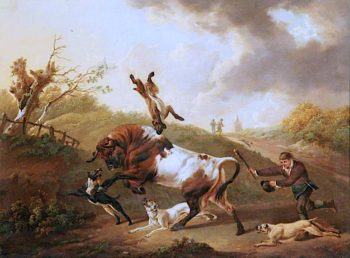Bull Terriers Baiting a Bull | Charles Towne | oil painting