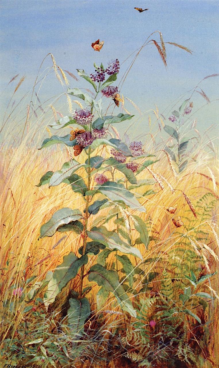 Milkweeds | Fidelia Bridges | oil painting