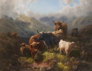 Highland Cattle – Loch Long