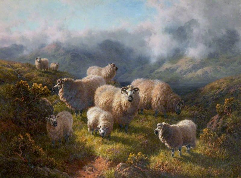 Highland Sheep | Robert Watson | oil painting