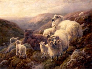 Highland Sheep | Robert Watson | oil painting