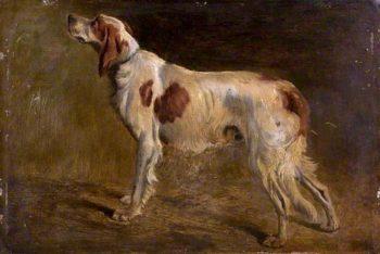A Setter | John Alfred Wheeler | oil painting