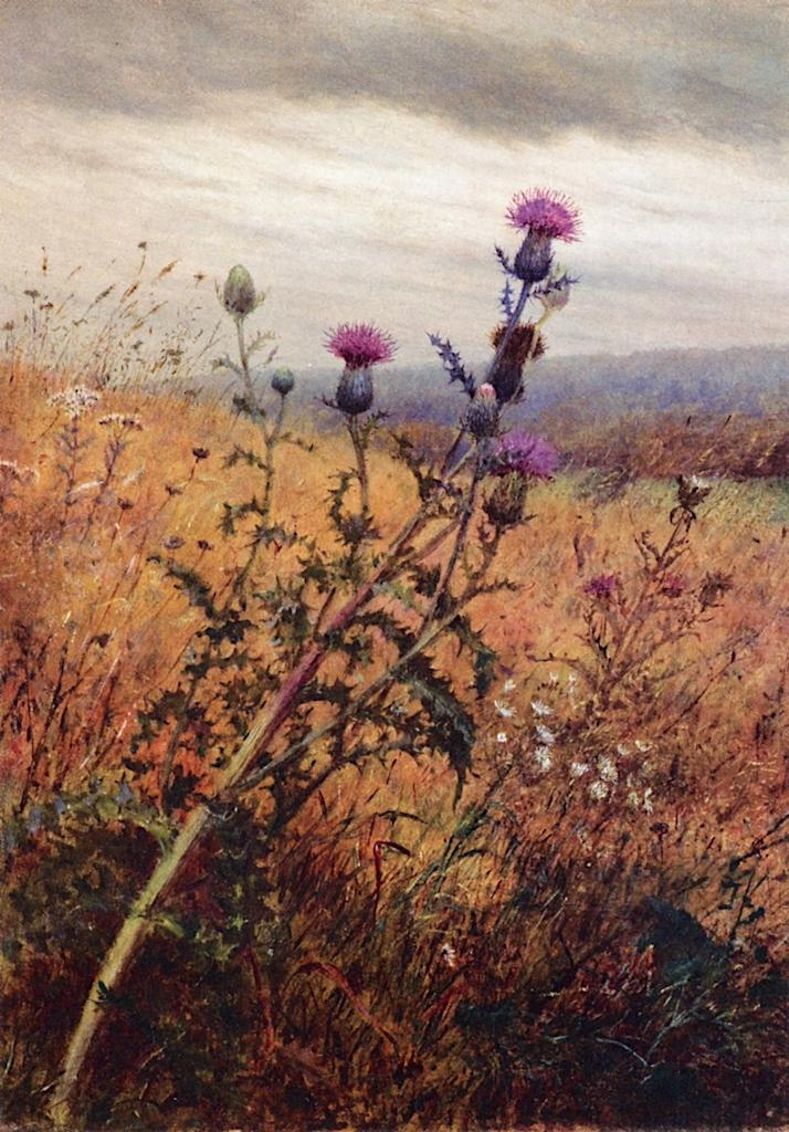Thistle in a Field   Fidelia Bridges   oil painting