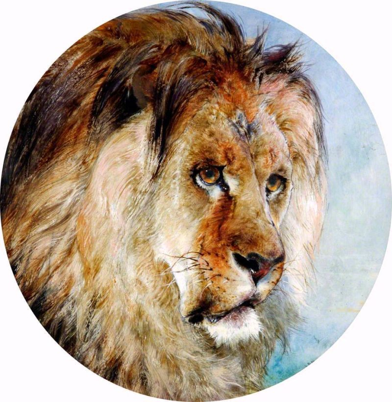 A Lions Head   William Huggins   oil painting