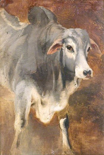 Study of an Ox   William Huggins   oil painting