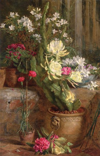 The Flowering Cactus | Annie Feray Mutrie | oil painting